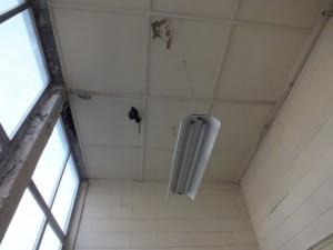 Plafond constitué de plaque de type menuiserite